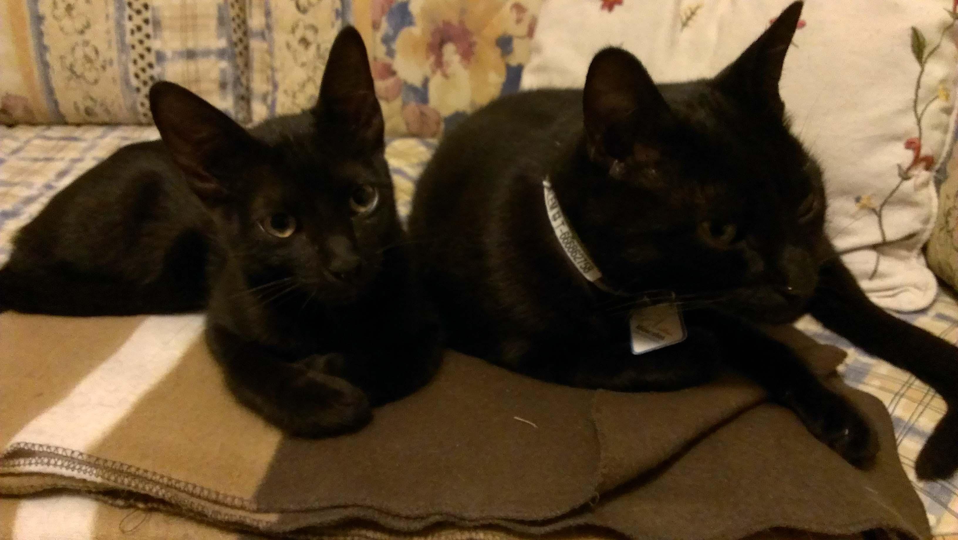 Reena y Salem